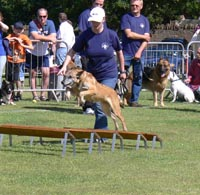 image of the dog agility display
